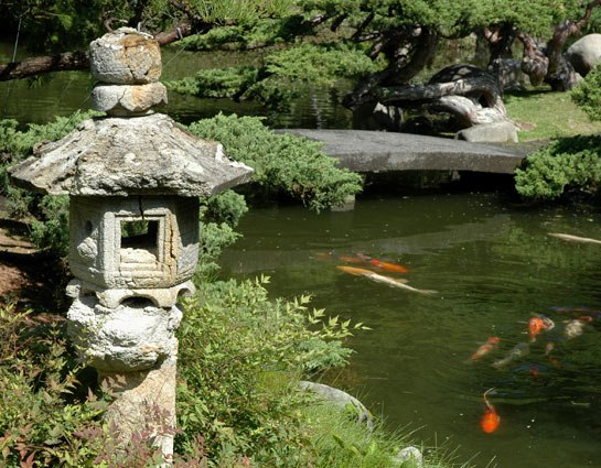 Koi by the Japanese Teahouse at the Huntington Library